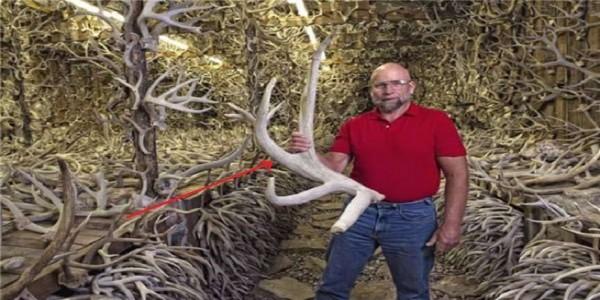 一生撿鹿角無數還供孩子上大學,來自美國的鹿角收藏達人!