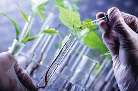 開發高端自然的食材核心價值